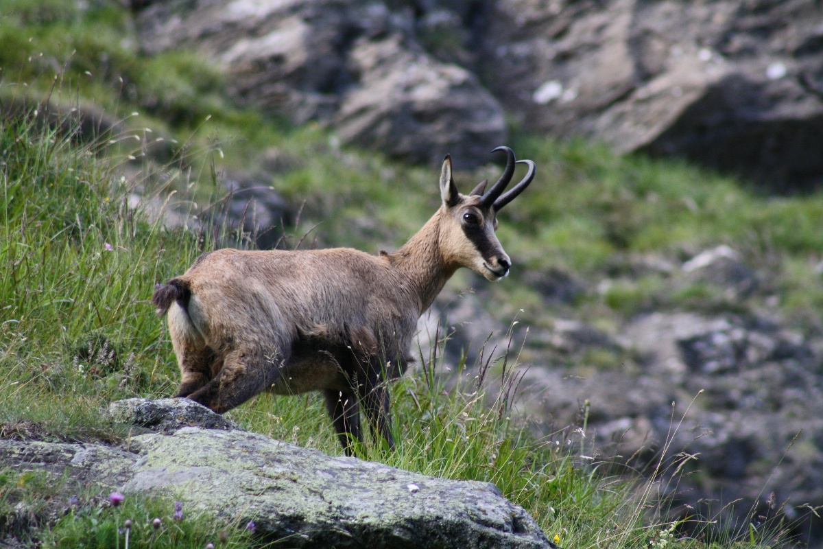 With luck, chamois may be seen along the way