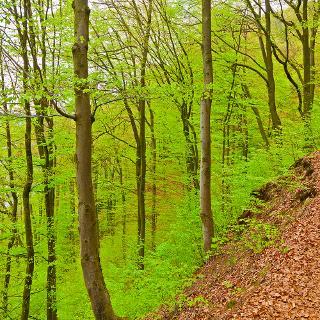 Prinzensteig im Frühlingswald