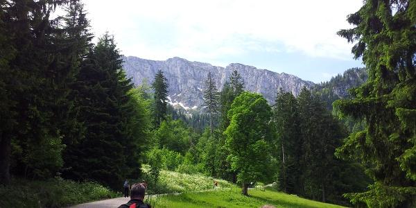 Forststraße über Eibelsfleck Alm